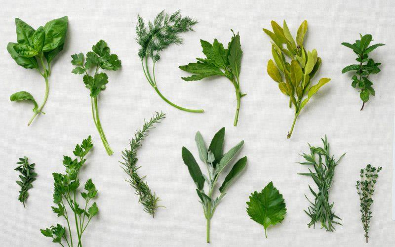 global-herbs-basic-thyme-0313