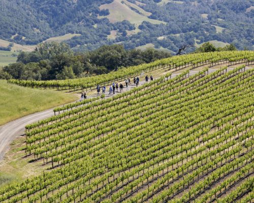 Jordan-Winery-Spring-Vineyard-Hike-Sonoma-Hiking-Healdsburg-BLOG_Z7A7693